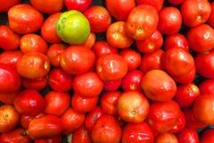 O tomate orgânico verde que está para fora Foto de Stock