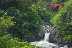 O Toroki cai na ilha de Yakushima, Japão fotografia de stock
