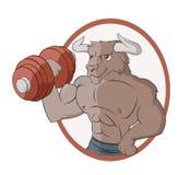 O touro está levantando um dumbbell Fotografia de Stock