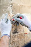 o trabalhador entrega a tomada de notas e a tiragem na pedra Trabalhador da construção que pavimenta a fachada home com pedra Fotografia de Stock Royalty Free