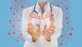 O trabalhador médico mostra o intestino imagem de stock royalty free