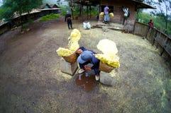 O trabalhador tradicional do enxofre em ijen o vulcão Imagens de Stock