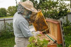 O trabalho das abelhas nas colmeia é exato e regulado por um apicultor imagens de stock royalty free