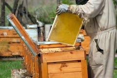 O trabalho dos apicultor Fotografia de Stock Royalty Free