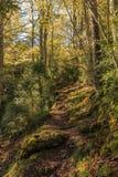 O trajeto é agradável entre as árvores altas e obscuros Foto de Stock Royalty Free