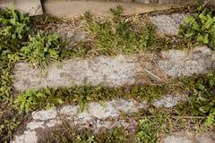 O trajeto é feito das lajes grama e wildflowers brotados entre as placas imagens de stock royalty free
