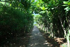 O trajeto ao ike dos toros ou os toros pond na ilha de Shomoji, Okinawa fotos de stock