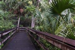 O trajeto ao rio, arco-íris salta parque estadual, Florida, EUA Imagens de Stock