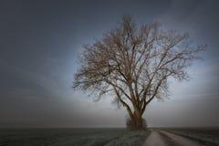 O trajeto conduz a uma árvore desencapada no humor nevoento da manhã imagem de stock