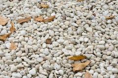 O trajeto da caminhada da pedra do seixo do close up e seca as folhas fotos de stock