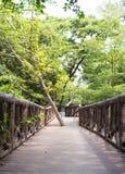 O trajeto da ponte de madeira entre a floresta selvagem Imagem de Stock Royalty Free