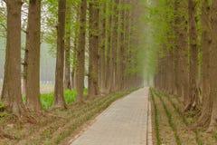 O trajeto de floresta estende Imagem de Stock Royalty Free