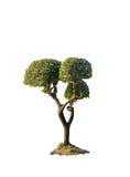 O trajeto de grampeamento isolou a árvore fresca do arbusto do tamanho médio Fotografia de Stock Royalty Free