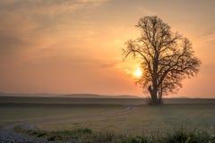 O trajeto do cascalho conduz a uma única árvore no humor nevoento da manhã no nascer do sol fotografia de stock