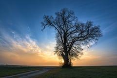O trajeto do cascalho conduz a uma única árvore no humor nevoento da manhã no nascer do sol foto de stock royalty free