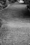 O trajeto do jardim do ` s do recurso em Khao imagem preta & branca de Yai Foto de Stock