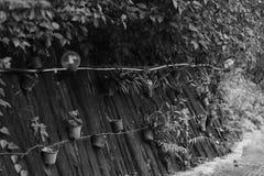 O trajeto do jardim do ` s do recurso em Khao Yai Foto de Stock