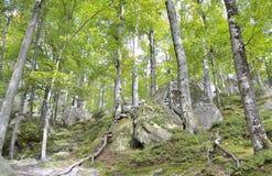Floresta em montanhas foto de stock royalty free