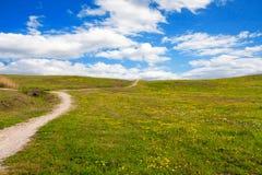 O trajeto entre o prado com margaridas Fotos de Stock Royalty Free