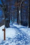 O trajeto escala subida na floresta do inverno Foto de Stock