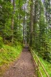 O trajeto na floresta na borda da inclinação é encerrado por uma cerca pequena Em torno do pinho alto, delgado foto de stock royalty free