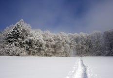 O trajeto na floresta congelada Foto de Stock Royalty Free
