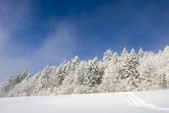 O trajeto na floresta congelada Fotos de Stock Royalty Free