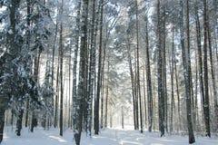 O trajeto na floresta do inverno imagens de stock
