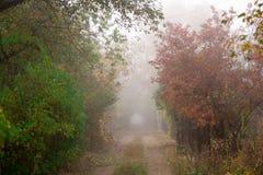 O trajeto na floresta do outono e no hardtail da bicicleta Bicycle o encontro na terra na floresta Foto de Stock Royalty Free