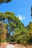 O trajeto no parque Imagem de Stock Royalty Free