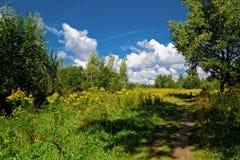O trajeto no prado ensolarado Fotografia de Stock Royalty Free