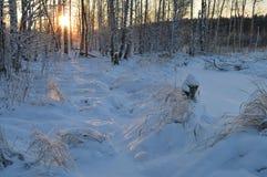 O trajeto solar na neve é uma floresta do inverno no nascer do sol Foto de Stock Royalty Free
