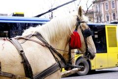 O transporte com o cavalo bonito Fotografia de Stock Royalty Free