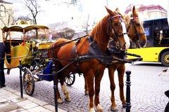 O transporte com o cavalo bonito Fotos de Stock