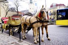O transporte com o cavalo bonito Fotos de Stock Royalty Free
