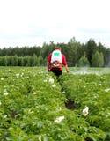 O tratamento da batata colhe com produtos químicos do besouro de Colorado Fotografia de Stock Royalty Free
