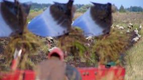 O trator ara a terra cercada por cegonhas filme