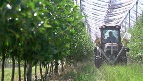 O trator pequeno está conduzindo entre as fileiras das árvores no pomar de maçã video estoque