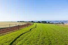 O treinamento do cavalo de raça segue a paisagem Fotografia de Stock Royalty Free