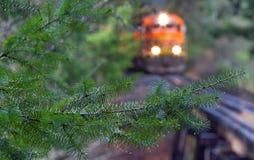 O trem alaranjado rola através de uma floresta úmida de Oregon imagens de stock royalty free