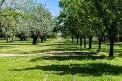 O trem segue o cruzamento do campo arborizado fotos de stock royalty free