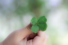O trevo de quatro folhas é uma variação rara do trevo comum da três-folha Fotografia de Stock Royalty Free