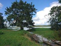 O tributário do Rio Amazonas em Indiana Peru fotos de stock royalty free