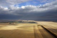 O trigo do campo Foto de Stock