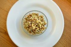 O trigo mourisco fresco brota para comer saudável imagem de stock royalty free