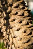 O tronco da árvore Foto de Stock Royalty Free