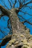 O tronco de árvore Imagem de Stock