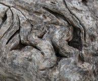 O tronco de árvore Fotos de Stock