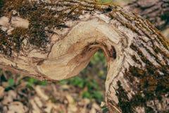 O tronco de árvore estragado fotografia de stock