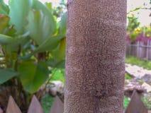 O tronco de árvore, fecha-se acima do tiro Natureza e tiro exterior imagem de stock